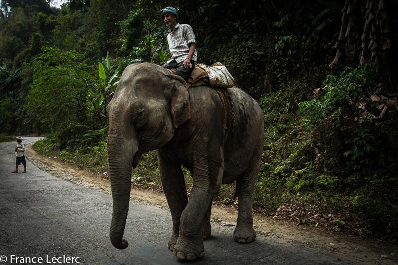 Assam (16 of 26)