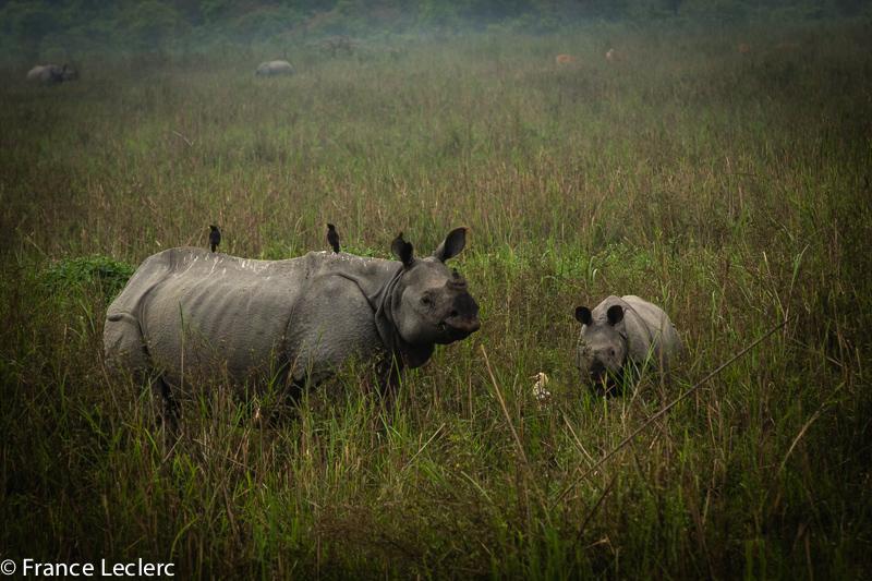 Assam (17 of 26)