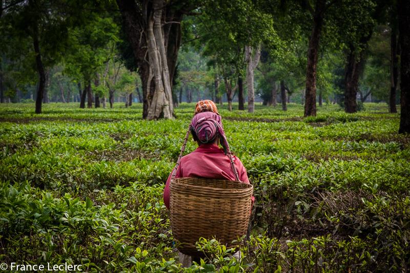 Assam (22 of 26)