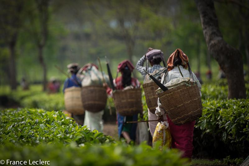 Assam (24 of 26)