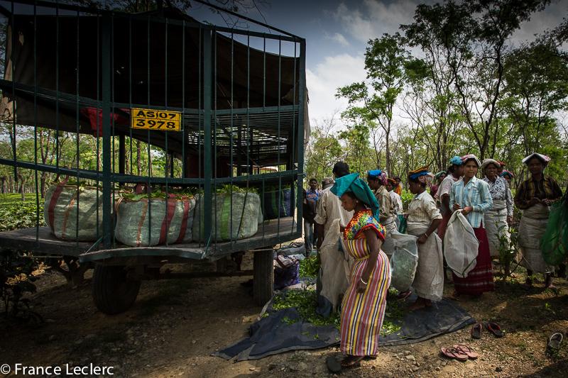 Assam (26 of 26)