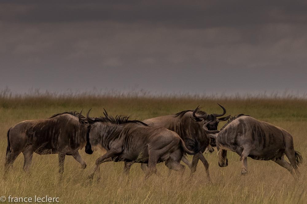 Maasai (6 of 29)
