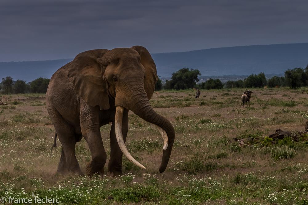 Maasai (8 of 29)